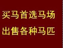 北京京南马场